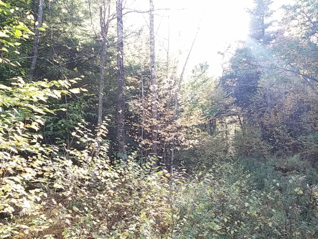 Land for Sale, Cummington