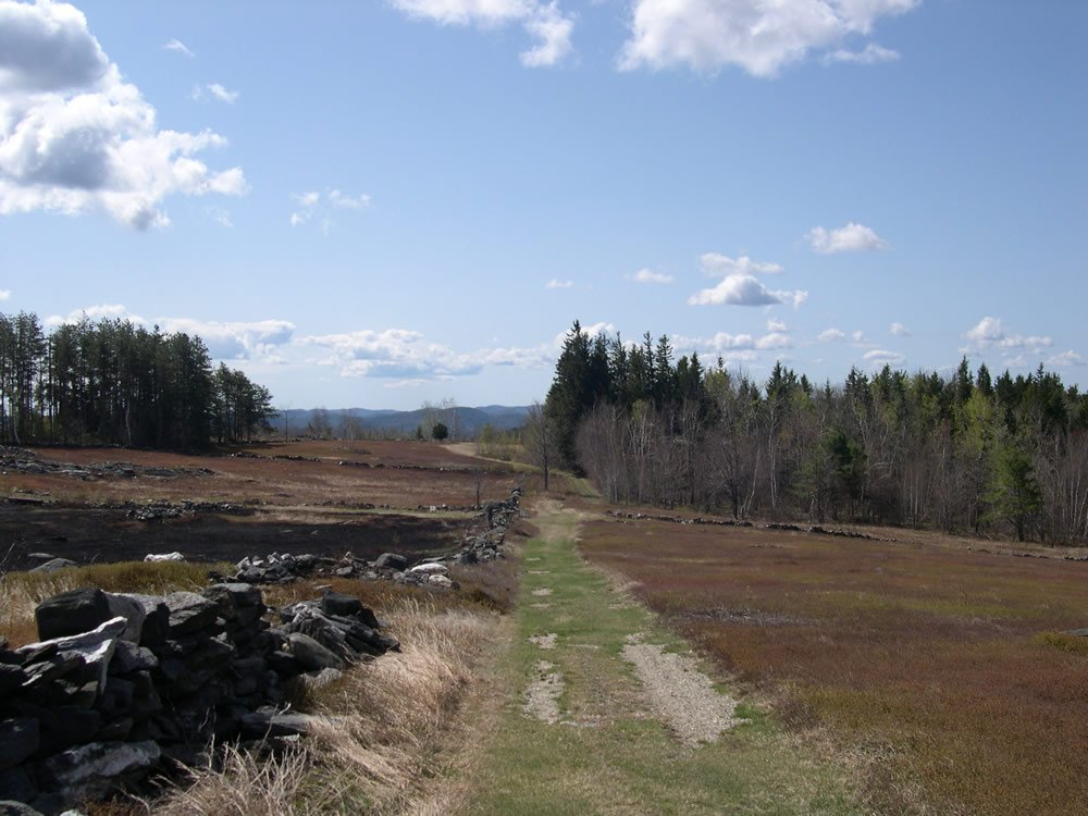 View of the trail at Benson Place Blueberry Farm