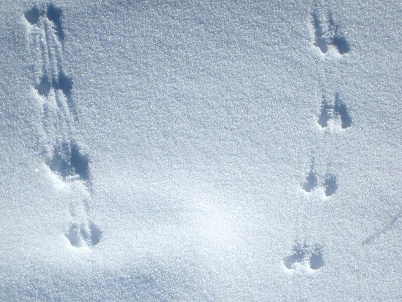 snow-footprints